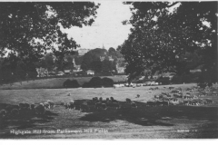 Sheep on Highgate Hill 1931
