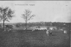Sheep on Parliament Hill 1911