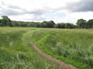 The changing flora of the Heath