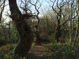 Trees of the Heath