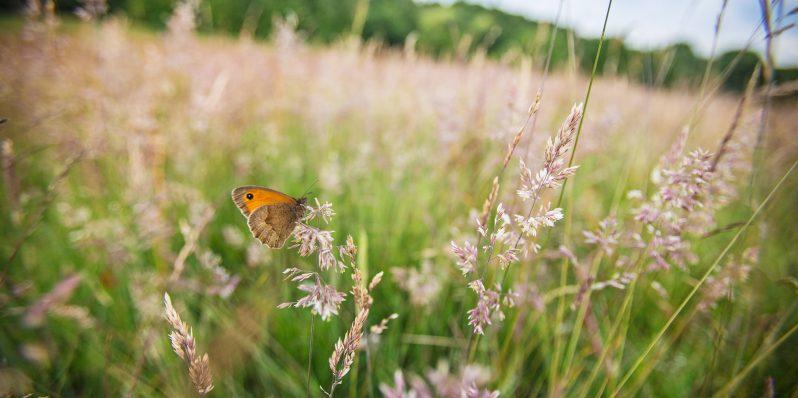 Nature and wildlife of Hampstead Heath – The Heath & Hampstead Society