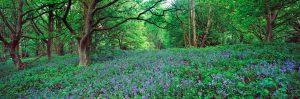 Heavenly Herbs and Wondrous Weeds on Hampstead Heath