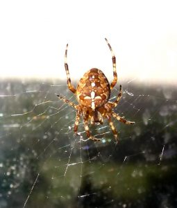 Spiders and other Invertebrates TBC
