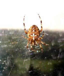 Spider Foray