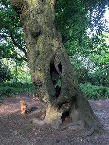 Hollow Beech, The Vale