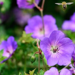 Biodiversity on The Heath